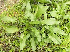 Σπίτια και αποθήκες από παλέτες - Φτιάχνω μόνος μου Lettuce, Herbs, Vegetables, Gardening, Lawn And Garden, Herb, Vegetable Recipes, Salads, Veggies