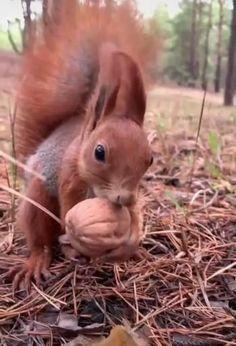 Cute Wild Animals, Cute Little Animals, Cute Funny Animals, Animals Beautiful, Squirrel Pictures, Cute Animal Pictures, Nature Animals, Animals And Pets, Cute Squirrel