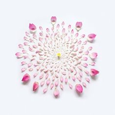 """""""Exploded Flowers"""" by artist Qi Wei"""