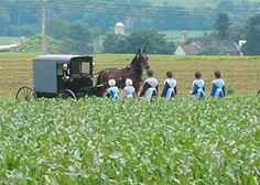 Amish-horse and buggy