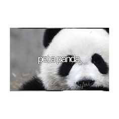 By the way my favorite animal is a panda! so it would be great to pet a panda:) The Bucket List, Bucket List Tumblr, Bucket List Before I Die, Panda Love, Life List, Just In Case, Things To Do, Shit Happens, My Love