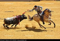 THE BEAUTY OF THE HORSE / VERY UNEQUAL BATTLE