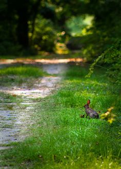 country lane  by vlmitchell1, via Flickr