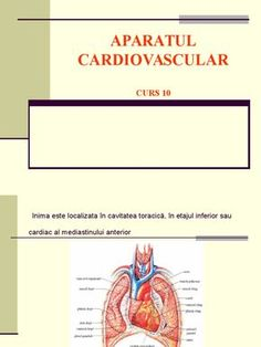 Aparatul cardiovascular - Inima