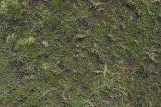 les plantes aquatiques de la texture aérienne rez terrain swamp