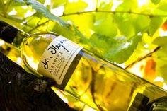 albariño wine from Rias Baixas
