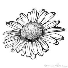 dessin marguerite blanche - Recherche Google