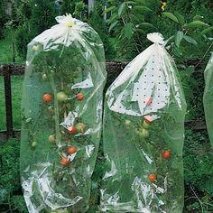 Plastic over de tomaten heen doen met gaatjes om ze warm te houden.