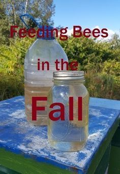 Having enough natural honey on the hive is best for overwintering. If you are concerned and want to help, sugar syrup is a great feeding option. Feeding Bees, Bee Hive Plans, Beekeeping For Beginners, Raising Bees, Buzz Bee, Overwintering, Bee Farm, Backyard Beekeeping, Bee Friendly