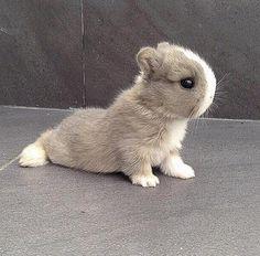 Health-conscious - Bunny doing yoga