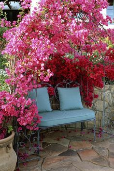 Arbor with Color