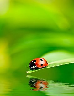 Ladybug by Stu99, via Flickr