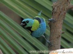 Investigación botánica en Argentina, Selva de Misiones