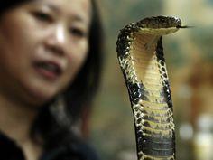 Reuters  Você comeria? Restaurante de Hong Kong serve sopa de cobra no cardápio  Além de um alimento apreciado, as cobras são consideradas remédio para vários problemas de saúde, de acordo com a medicina tradicional chinesa