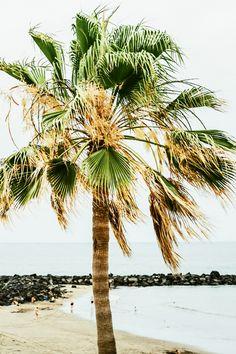 Playa de Troya auf Teneriffa ❤ Direkt am Strand verläuft eine langgezogene Promenade die von La Caleta bis nach Los Cristanos verläuft und durch kleine Cafes, Bars und Restaurants gesäumt ist. Wunderschön zum Flanieren. Bild von @Ezgipolat #Expedia #ReiseDichInteressant