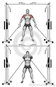 Exercising. Shoulders Cable Raise Front