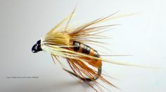 Tying the Latex Caddis Pupa by Davie McPhail - Locken Fly Fishing Lures, Fly Fishing Tips, Fishing Videos, Hare's Ear, Fly Tying Patterns, Natural Latex, Natural Brown, Trout, Salmon