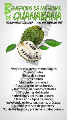 BENEFICIOS DE LAS HOJAS DE GUANABANA  #GUANABANA Fitness Pal, Health Fitness, Health Advice, Health Care, Health And Wellness, Natural Medicine, Healthy Fruits, Healthy Smoothies, Healthy Eating