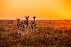 La Namibie figure en 2ème position de notre Top 10 des pays à visiter en 2015  http://www.lonelyplanet.fr/article/les-10-pays-visiter-en-2015 #Namibie #Afrique #voyage