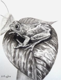 Supreme Portrait Drawing with Charcoal Ideas. Prodigious Portrait Drawing with Charcoal Ideas. Frog Drawing, Ship Drawing, Animal Drawings, Pencil Drawings, My Drawings, Drawing Skills, Drawing Techniques, Drawing Ideas, Reptiles