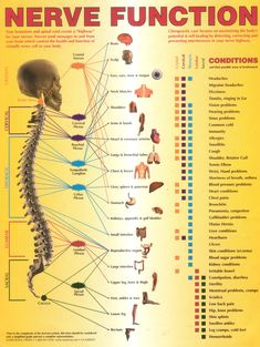 Spinal Disc Chart Nerve Function Pain
