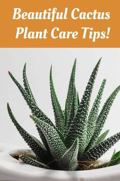 Looking for pretty fall decor houseplants that are low maintenance? Check out this easy to care for cactus that looks wonderful and cleans your indoor air too! #falldecor #cactuscare #cactusplant Aloe Vera Plant Indoor, Indoor Plants, Indoor Gardening, Aloe Vera Supplement, Kinds Of Cactus, Growing Aloe Vera, Natural Air Purifier, Cactus Care, Natural Cough Remedies