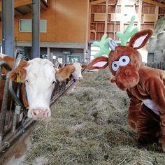 Im nawu Kinderhotel ist es immer spaßig und es gibt viel zu lachen :) Goats, Cow, Animals, Hotels For Kids, Laughing, Animales, Animaux, Cattle, Animal