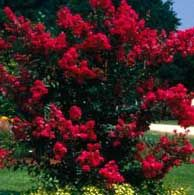 Top 10 Flowering Trees (Birds & Blooms)