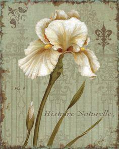 Histoire Naturelle I Art Print