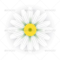 Chamomile  #GraphicRiver         Vector illustration of daisy (chamomile) flower     Created: 11September13 GraphicsFilesIncluded: JPGImage #VectorEPS Layered: No MinimumAdobeCSVersion: CS Tags: blossom #camomile #chamomile #chrysanthemum #daisy #florals #flowers #gerbera #isolated #marguerite #mayweed #nature #objects #petal #plants #single #spring #summer #vector #white #yellow