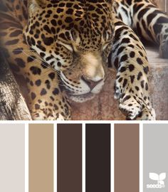 Possible color scheme with cheetah print.