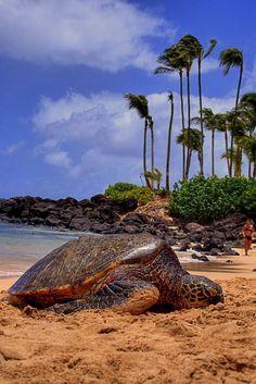 Turtles finally arrive ...