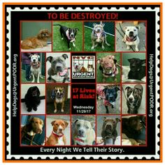 ❌TO BE DESTROYED❌ WEDNESDAY 11/29/17. 17 PRECIOUS LIVES. PLEASE SHARE/ADOPT/FOSTER. THE NYC. URGENT DEATH ROW DOGS. THEY NEED YOU.🌟http://nycdogs.urge... - Tina Behla - Google+