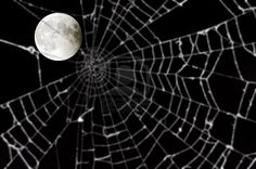 Even the cobwebs shimmer in the moonlight