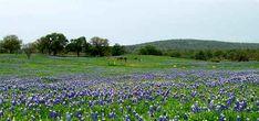 Fredericksburg Texas Bluebonnet Trail