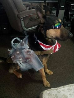 Fafnir Our German Shepherd Rescue Dog Modeling His Dogmeat (Fallout 4) Halloween Costume