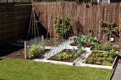 square foot gardening toepassen in je moestuin