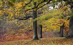 Ash Tree Identification | ashtree-_2392703k.jpg