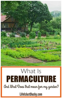 What Is Permaculture and is it right for your garden? Whether you hve a homestead, a large back yard or an urban home, the permaculture priniples and design ideas are all the same. Plan small simple principles for designing your farm and garden or edible landscape the permaculture way. DIY ideas.