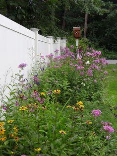 My gardens by Gina Marino