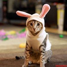Happy Easter Cat - http://cutecatshq.com/cats/happy-easter-cat/