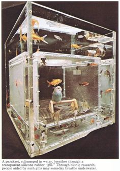 """A parakeet, submerged underwater, breathes through a transparent silicone rubber """"gill."""" Through bionic research, people aided by such gills may someday breathe underwater Jellyfish Tank, Cool Fish Tanks, Breathing Underwater, Aquarium Design, Bizarre, Budgies, Parrots, Aquarium Fish, Fish Aquariums"""