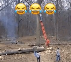 GIF How to quickly descend from the tree Funny Vid, Funny Fails, Funny Memes, Stupid People, Crazy People, Darwin Awards, Weird But True, Best Fails, Funny Jokes For Adults