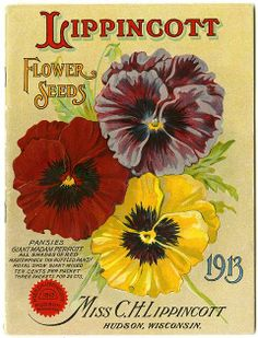 "The Carrie Lippincott 1913 catalog cover features assorted colorful pansies.  Carrie Lippincott, the self-proclaimed ""pioneer seedswoman"" and ""first woman in the flower seed industry"" established her mail-order flower seed business in Minneapolis in 1891."