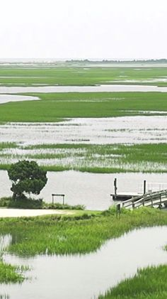 Our prize-winning video about the beautiful Hobcaw Barony...