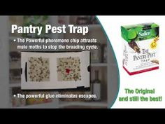 1000 Images About Indoor Pest Control On Pinterest Insects Flying Insects And Moth