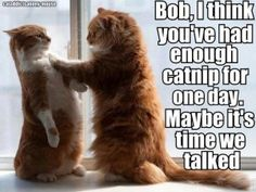 """* * BOB: :""""Since whens yoo be de world's authoritys ons catnip? Me be usin' it medicinally fer yer information!"""""""