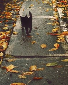 I really want a black cat but I'm allergic to cats so... #autumn #fall…