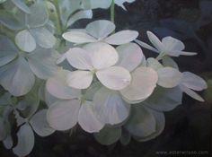 Still life oil painting of white hydrangea flowers at night by Ester Wilson - http://www.esterwilson.com