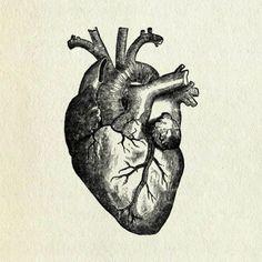 Resultado de imagem para coração verdadeiro desenho